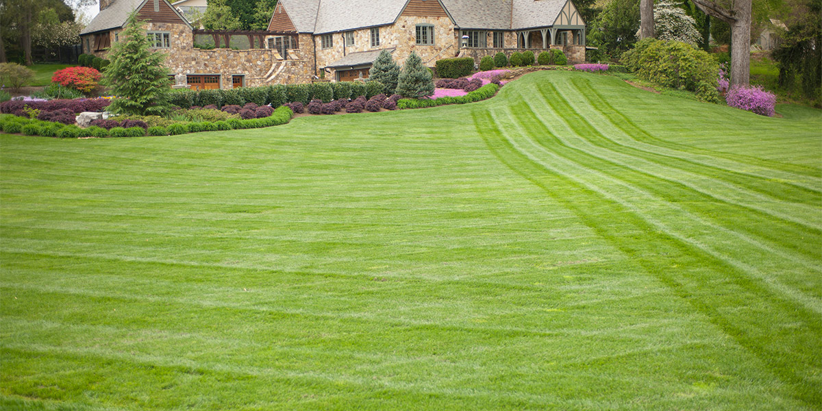Market Category Page - Lawn Care